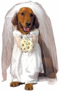 Matching Dog Costumes (Pet Bride Dog Halloween Costume For Medium Dogs by Pet Friendzy)