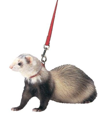 Marshall Ferret Harness and Lead, Red by Marshall Pet Products
