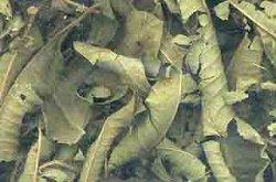 Lemon Verbena Leaf cut 1oz (H16LEMVC) - (Aromatherapy Verbena)
