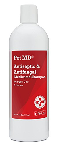 Pet MD Antiseptic and Antifungal Medicated Shampoo for Dogs, Cats and Horses with Chlorhexidine and Ketoconazole - Soap and Paraben Free - 16 Oz by Pet MD