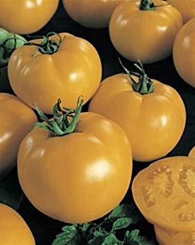 VISA STORE Sunny Boy Tomato Seeds