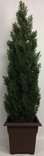(Outdoor Artificial UV Rated 5 ft Cedar Topiary Tree with Square Brown Planter)