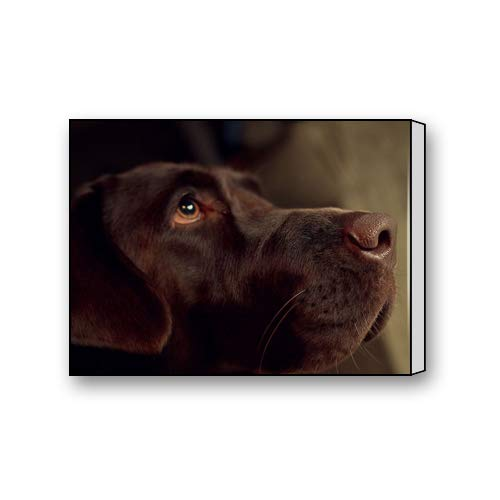 Chocolate Labrador Retriever Dog Custom Canvas Print Personal Photos Print on Canvas Ready to Hang on Your Wall as a Modern Art 10