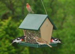 Recycled Plastic Large Hopper Bird Feeder - 2.5 Quarts of Seed (Large Hopper Bird Feeder)