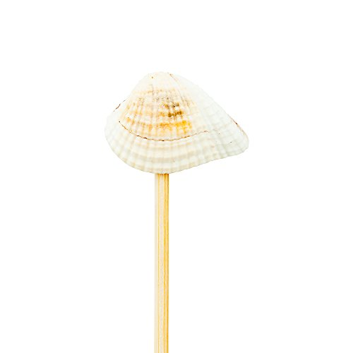 Seashell Pick, Mini Seashell Skewer, Food Picks, Sticks - 4'' - Perfect for Serving Appetizers and Cocktail Garnishes - Natural Color - 1000ct - Restaurantware by Restaurantware (Image #3)