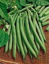 Fash Lady Harvester Bush Bean - 1/4 lb-Approx 280 Seeds - (53 days) Organic, Untreated