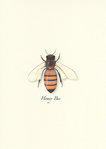 (Honey Bee Boxed Note Cards-- Set of 8)