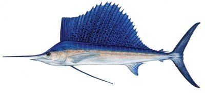 - Fish Stix Sailfish Decal