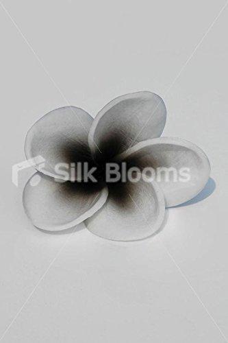 White Frangipani Wblack Centre Plumeria Single Hawaii Flower