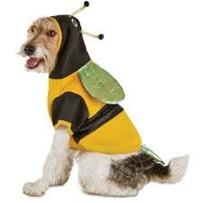 PETCO Bootique Bumble Bee Pet Costume~SMALL~