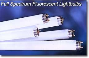 Full Spectrum Fluorescent LampsPHILIPS TL 950 T8 98 CRI 5000 K