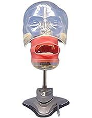 Portable Dental Phantom Head Training Simulator Unit Manikin, 360-Degree Adjustment, Easy Installation, for Dentist Education and Training Equipment