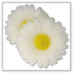 "Daisy Blossom Floating Candles - 3¼"" dia. - White - (Each)"