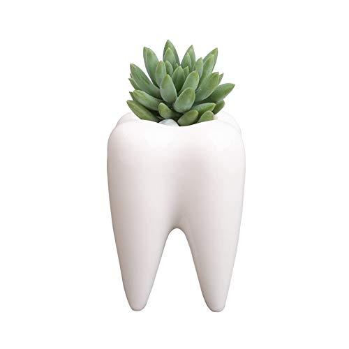 YOUYA DENTAL Succulent Plant Pots, Cute Tooth Shape White Ceramic Planter Cactus Plant Pot Flower Vase, Creative Pen Pencil Holder for Office Home Desk Deco (Plants Not Included)