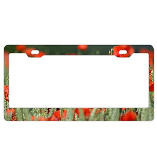 (YEX Abstract Poppies Like elves9 License Plate Frame Car License Plate Covers Auto Tag Holder 6