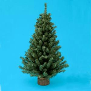 "Kurt Adler 24"" Miniature Pine Christmas Tree"
