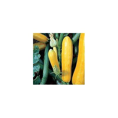 Golden Zucchini 30 Seeds - GARDEN FRESH PACK! : Vegetable Plants : Garden & Outdoor