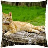 stone trail in the forest hdr - Throw Pillow Cover Case (18