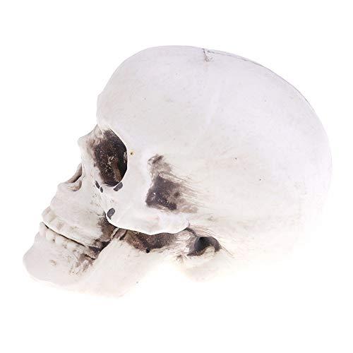 3 Pack, Halloween Decoration Artificial Human Skull Head Model Horror Prop Plastic Skull Head DIY Party Decorations Coffee Bars Ornament -