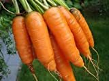 buy Carrot Seeds- Scarlet Nantes now, new 2018-2017 bestseller, review and Photo, best price $4.99