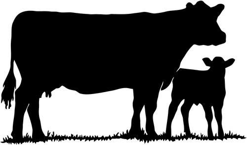 Mandy Graphics Cow Calf Mom Baby Milk Farm Vinyl Die Cut Decal Sticker for Car Truck Motorcycle Windows Bumper Wall Home Office Decor Size- [6 inch/15 cm] Wide and Color- Gloss White