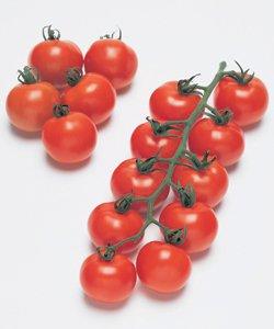 【中玉トマト種子】フルティカ 1000粒(タキイ種苗) B00ANEHYGQ