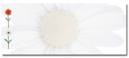 Masterpiece Studios 907398 Daisies No.10 Envelope - Pack of 50 ()