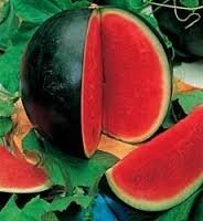 Watermelon Sugar Baby- 30 Seeds