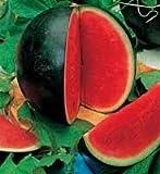 Watermelon Sugar Baby- 30 Seeds