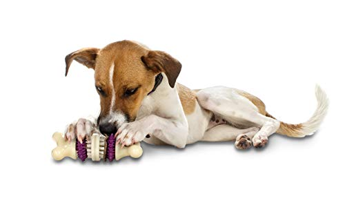 - PetSafe Busy Buddy Bristle Bone Dog Toy, Chew Toy with Treats, Medium