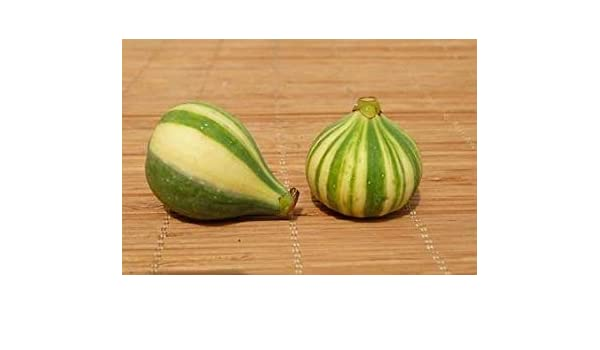 Semillas PlenTree Rara figura rayada Treeficus Carica Rigato del Salento 35 semillas frescas/Paquete Frutales