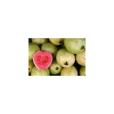 Seeds and Things Feijoa Sellowiana Pineapple Guava 15 Seeds for a Blooming, Fruit-bearing Evergreen Shrub: Toys & Games