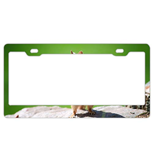 (Christopher Macadam Squirrel Stone Polished Alumina License Plate Frame Mirror Finish 2 Holes)
