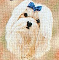 Pure Country 1167-LS Maltese Pet Blanket, Canine on Beige Background, 54 by 54-Inch - Maltese Blanket