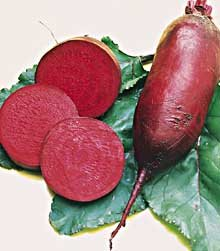 Cylindra Beet Seeds - 4.8 grams