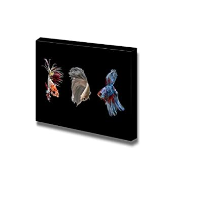 Canvas Prints Wall Art - Betta Fish on Black Background | Modern Wall Decor/Home Decoration Stretched Gallery Canvas Wrap Giclee Print & Ready to Hang - 12