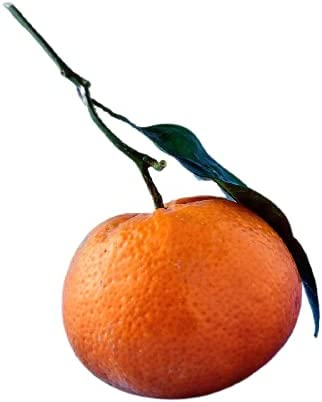 Orange Flavor (1oz)