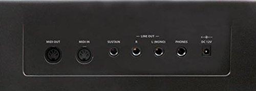 Ringway RP20 - Piano, pantalla LED, 8 voces, 143 x 515 x 310 mm: Amazon.es: Instrumentos musicales