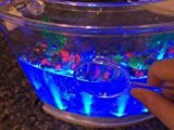 Live Lighted Ecosystem Ant Habitat with FREE CERTIFICATE for 25 Live Ants (1 Tube of Ants) - Lights Up