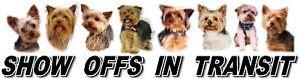 Yorkshire Terrier Show Off Car Window Sticker
