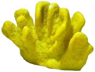 CATS PAW CORAL XL YELLOW 4 (Blue Ribbon Coral Cats)