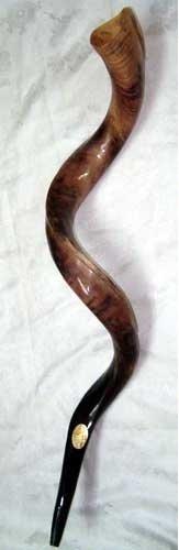 Kudu Shofar Kudu Yemenite Schofarhorn (koscher, poliert, ca. 71.12 cm - 76.20 cm NEU