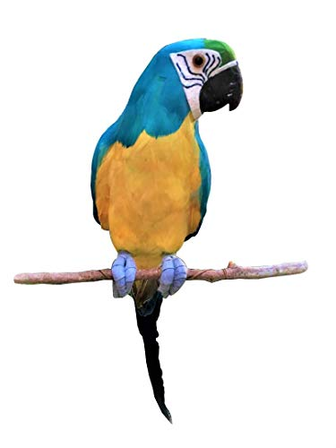 All Seas Imports Complete Handcrafted Ultra Lightweight Parrot with Real Feathers/Bendable FEET! ()