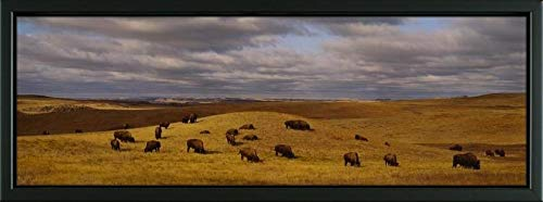 - Easy Art Prints Panoramic Images's 'High Angle View of Buffaloes grazing on a Landscape, North Dakota, USA' Premium Framed Canvas Art - 24