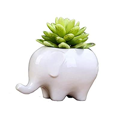 Gift Prod 1 Pcs Elephant Plant Window Boxes with Tray Cute Elephant Flower Pot, Modern White Ceramic Succulent Planter Pots/Tiny Flower Plant Containers (Style 15) : Garden & Outdoor