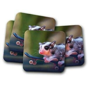 JIANCAICHEN 4 Set - Sugar Glider Squirrel Coaster - Cool Animals Wild Woods Fun Gift