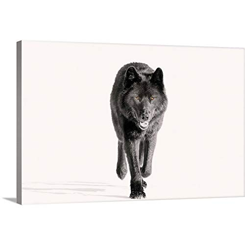 GREATBIGCANVAS Gallery-Wrapped Canvas Entitled Wolf Trotting On Snow Field, Tongass National Forest, Southeast Alaska by John Hyde 24