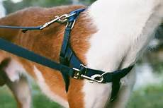 Freedom No Pull Harness Training Package product image