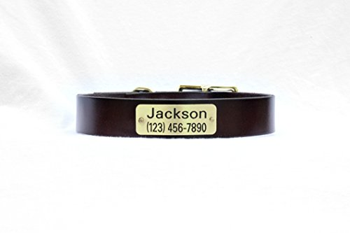 Amazon Leather Dog Collar