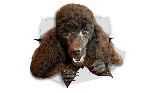Winston & Bear 3D Dog Stickers - 2 Pack - Happy Black Poodle for Wall, Fridge, Toilet and More - Retail Packaged Black Poodle Dog Stickers (Sticker Poodle Black)